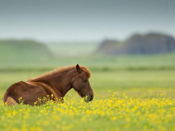 Я хочу спасти хотя бы одну лошадь в жизни