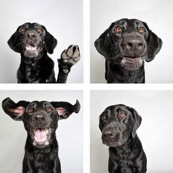 Фотограф делает смешные фотографии собак из приюта, чтобы помочь им найти новый дом
