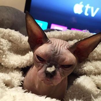 20 кошек, которые очевидно хотят вам навредить