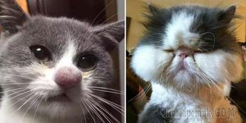 Несколько кошек, которых укусили пчелы