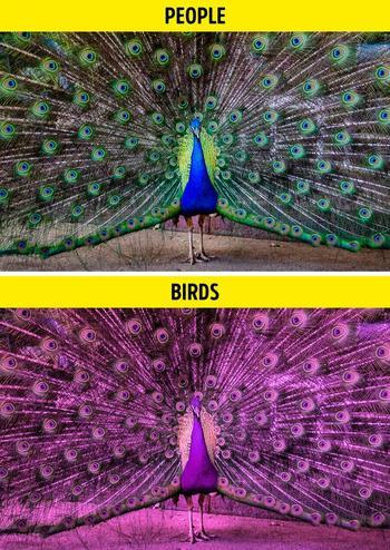 Как выглядит мир глазами разных представителей мира фауны