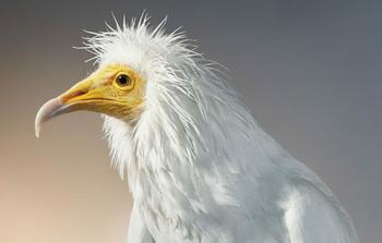 Красочные портреты птиц, которые делает фотограф Тим Флэк