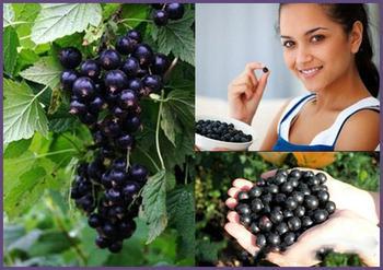 Лечебные свойства черной смородины. Рецепты здоровья