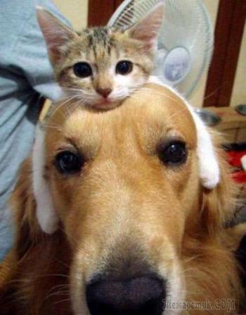 Кошки и собаки. Кто умнее и нужнее?