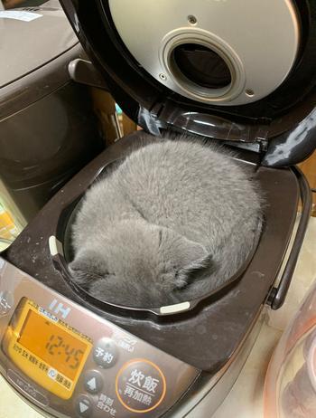 16 котиков, способных спать буквально где угодно