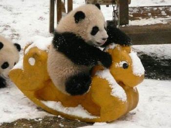 Детский сад для панд — самое милое место на земле