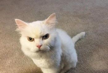 Коты, которые не сдерживают эмоций: забавные фото