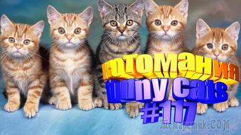 Смешные коты | Приколы с котами | Видео про котов | Котомания #117