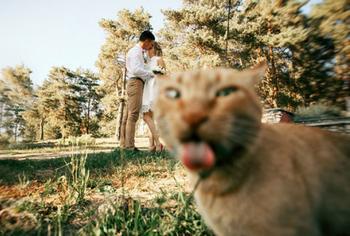 20 уморительных фотографий, на которых неожиданно появился кот