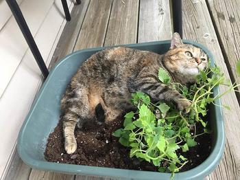 Котик спит, где захочет, в том числе и там, где человеку и в голову не придёт лечь!