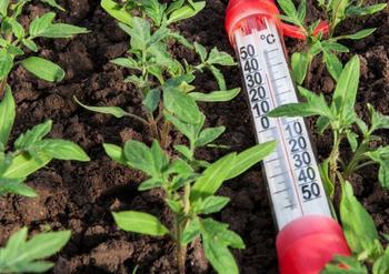Почему томаты цветут, но не завязываются, и как это исправить