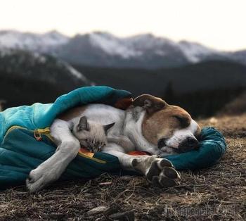 Эти кошка с собакой обожают путешествовать вместе
