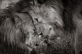 Изумляющие фотографии дикой природы с конкурса LUMIX People's Choice Award