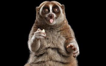 10 смертельно опасных животных, которые на первый взгляд не кажутся таковыми