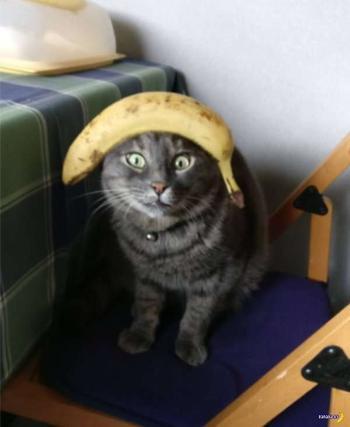 Что можно положить на кота