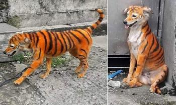 Кто-то раскрасил бездомного пса под тигра