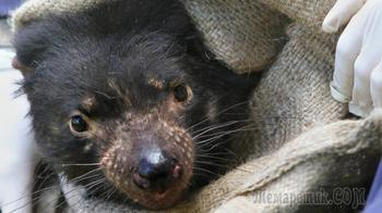 10 шокирующих болезней диких животных, представляющих угрозу для видов
