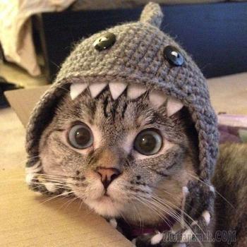 Нала – самая популярная кошка интернета, имеющая более 2 млн подписчиков на Instagram