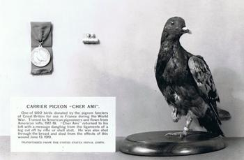 Самые умные представители фауны в истории