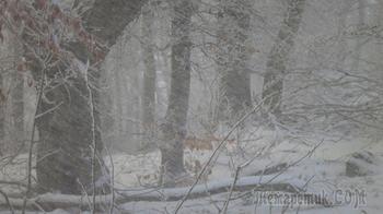 Зима в Крыму уже наступила, но только в горах