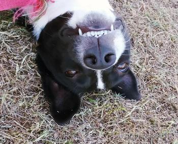 18 смешных собак, которые показали свои зубы, но вовсе не для того, чтобы напугать