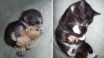 20 взрослых домашних животных, которые любят свои игрушки так же, как в детстве
