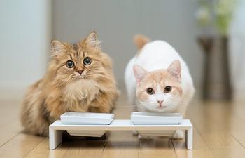 Как содержать двух котов в одном жилье?