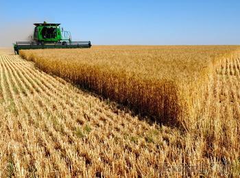 В Германии заявили о колоссальном потенциале России в сельском хозяйстве