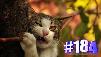 Смешные коты | Приколы с котами | Видео про котов | Котомания # 184 (видео)