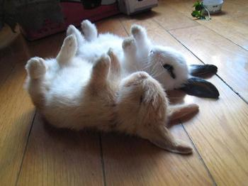 Кролики, которые сделают ваш день лучше