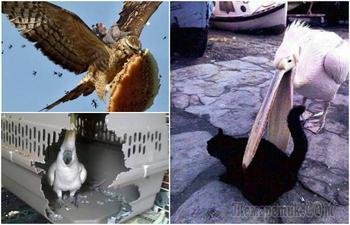 17 дерзких птиц, которые явно не в себе