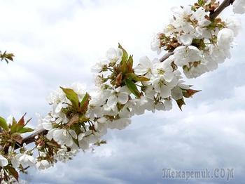 Весна, как праздник к нам приходит