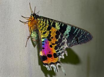 В хорошем настроении природа не жалеет ярких красок
