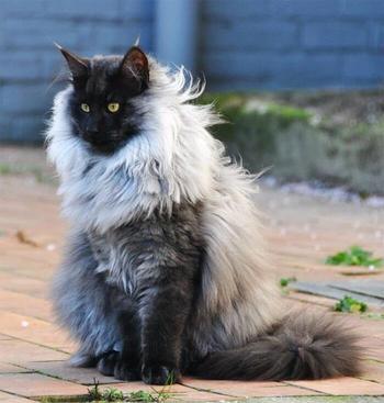 Пользователи Твиттера нашли смешных котов, которые похожи на фильмы известных режиссёров