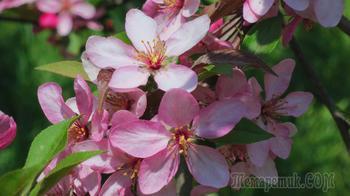 Тюльпаны из Крыма  в подарок к первомайским праздникам