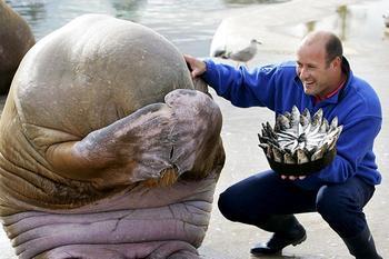 Животные, которые отмечают свой День Рождения круче, чем ты