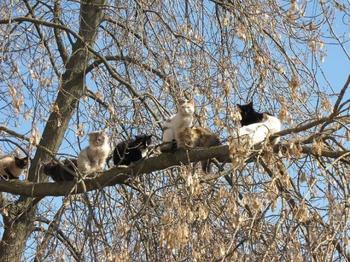 Кошки, которые выглядят так, будто их воспитали птицы