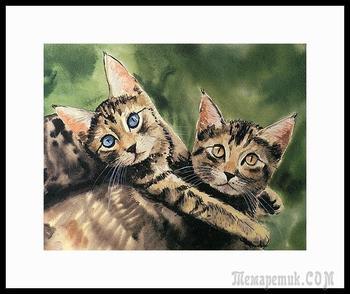 Дрю Страбл / Drew Strouble. И его удивительные коты