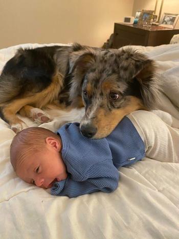 Настоящая дружба между ребенком и домашним питомцем
