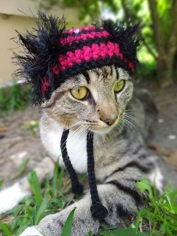 Вязаные шапочки для котиков