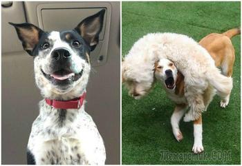 Забавные собаки, которые поднимут вам настроение