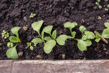 Делаем грядку для весеннего урожая: 5 простых шагов к майским овощам