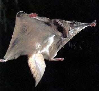 Животные, бросившие вызов гравитации