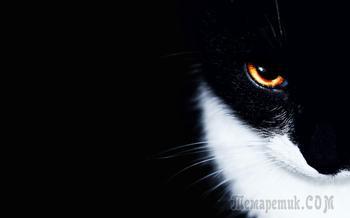 Кот (Стих)