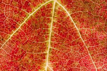 Вопрос на засыпку: почему листья осенью краснеют и желтеют?