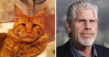 Животные - двойники знаменитостей