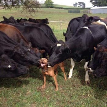 18 животных, которые ведут себя в своей семье совсем как мы