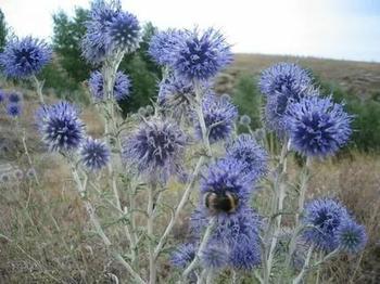 Растения, защищающие от порчи и сглаза