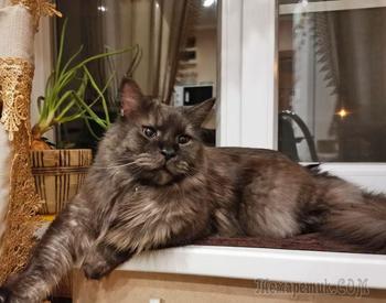 20 котиков-помощников, которые сделали столько всего полезного для своих хозяев