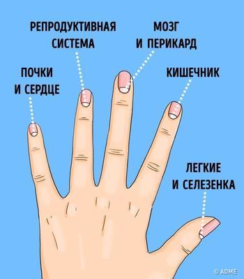 13 проблем со здоровьем, о которых предупреждают лунки на ногтях